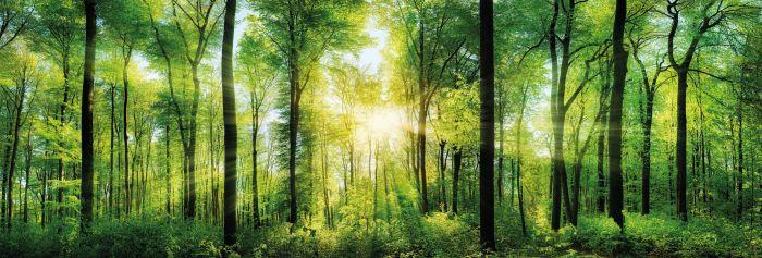 Sisustustaulu Reinders Bright Summer Forest