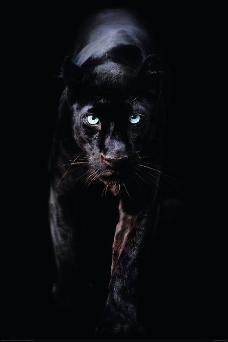 Sisustustaulu Reinders Black Panther