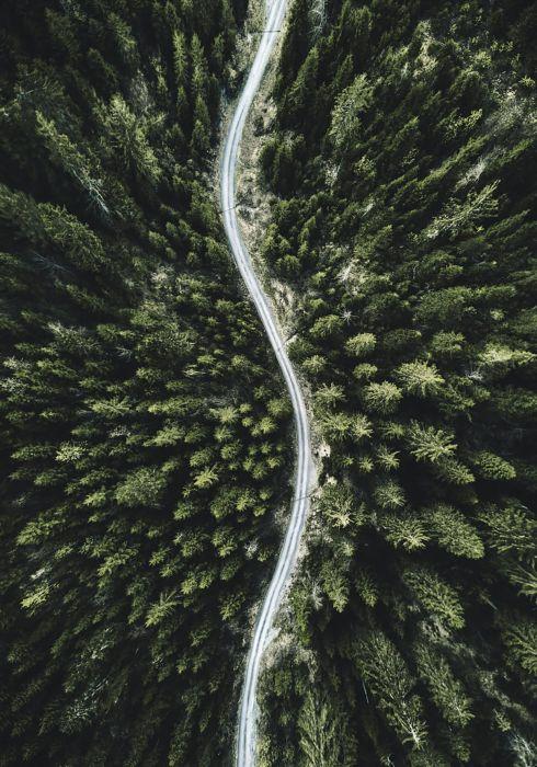 Sisustustaulu Reinders Scandic Forest II