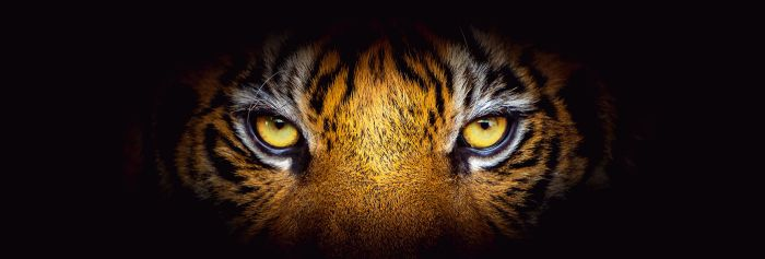 Sisustustaulu Reinders Eye of the Tiger