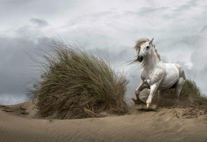 Fototapetti White Wild Horse