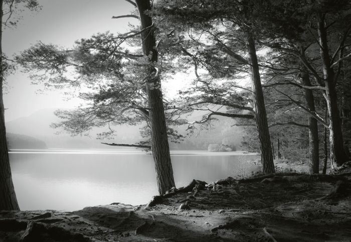 Fototapetti Forest Lake