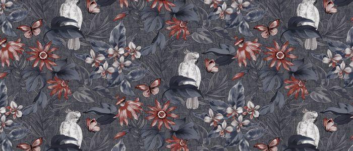 Vahakangas Bonita Papukaijat