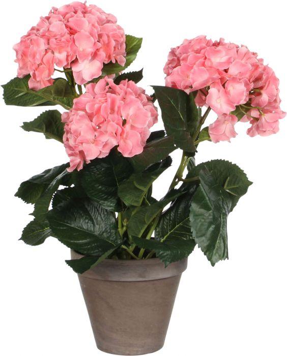 Silkkikasvi Hortensia 13,5 cm pinkki