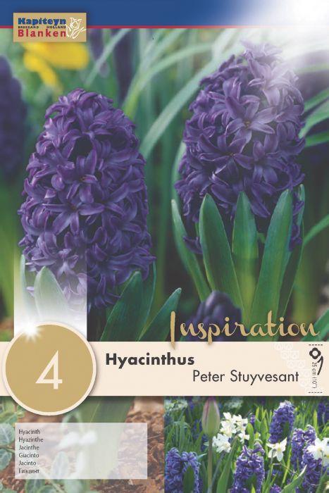 Syyskukkasipuli Hyasintti Peter Stuyvesant 4 kpl