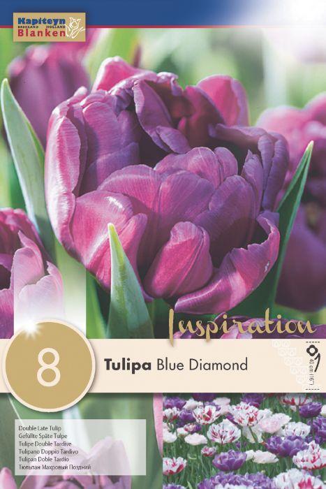 Syyskukkasipuli tulppaani Blue Diamond 8 kpl