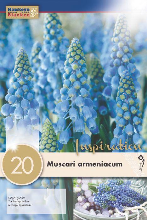 Syyskukkasipuli Helmililja Muscari Armeniacum 20 kpl