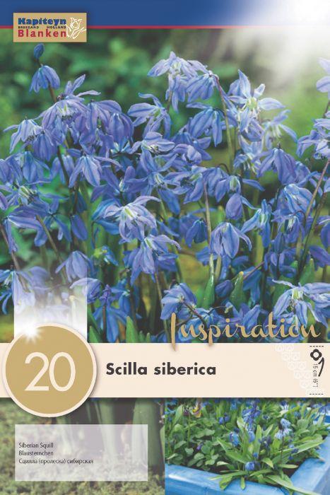 Syyskukkasipuli Idänsinililja Scilla Siberica 20 kpl