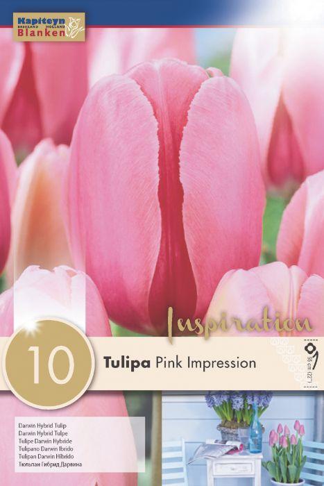Syyskukkasipuli Tulppaani Pink Impression 10 kpl