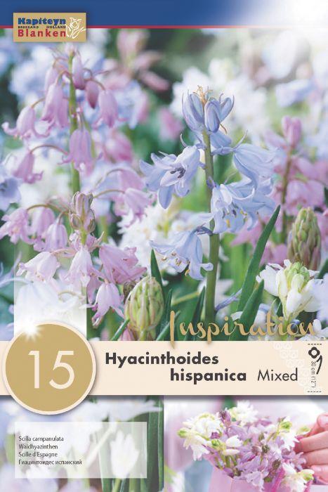 Syyskukkasipuli Espanjansinililja Hispanica Mix 15 kpl