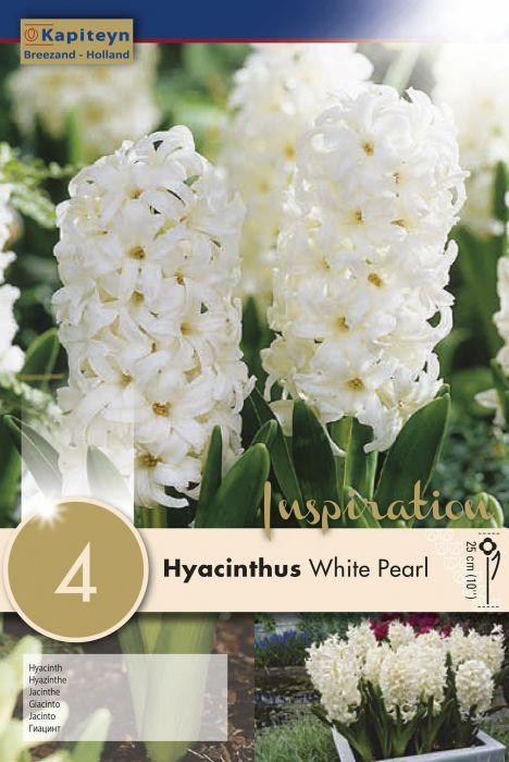 Syyskukkasipuli Hyasintti White Pearl 4 kpl