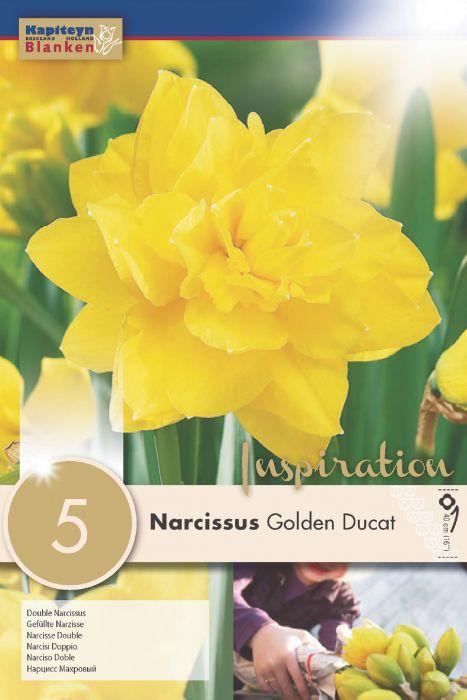 Syyskukkasipuli Narsissi Golden Ducat 5 kpl
