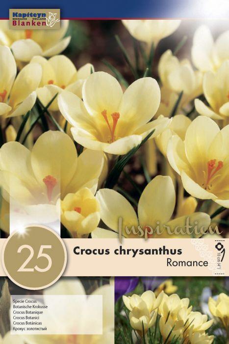 Syyskukkasipuli Krookus Chrysanthus Romance 25 kpl