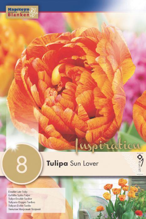 Syyskukkasipuli Tulppaani Douple Late Sunlover 8 kpl