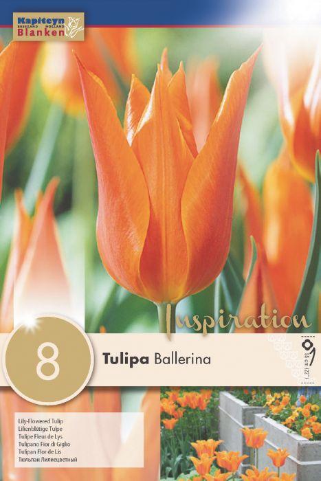Syyskukkasipuli Tulppaani Lily Ballerina 8 kpl