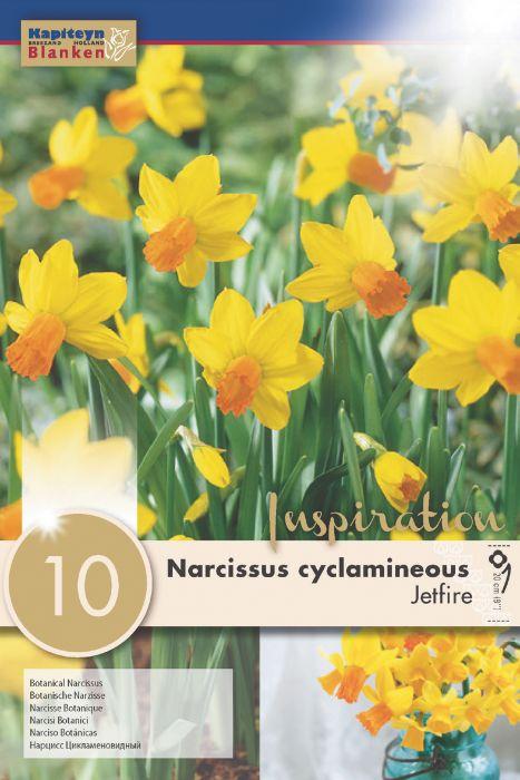 Syyskukkasipuli Narsissi Cyclamineous Jetfire 10 kpl