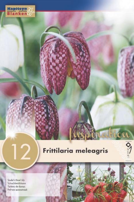 Syyskukkasipuli Kirjopikarililja Frittilaria Meleagris 12 kpl