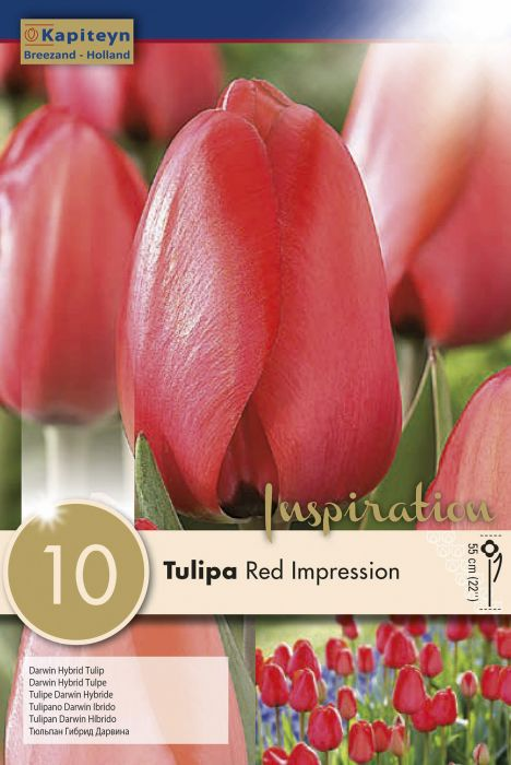 Syyskukkasipuli Tulppaani Darwin Hybrid Red Impression 10 kpl