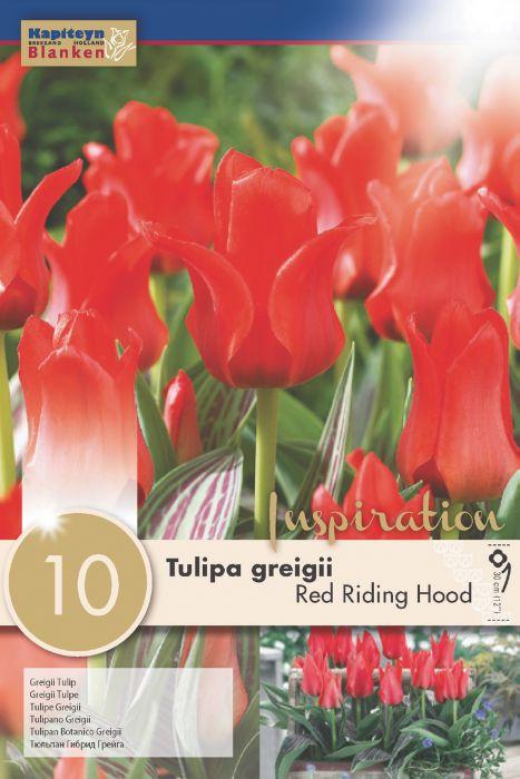 Syyskukkasipuli Tulppaani Red Riding Hood 10 kpl