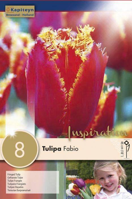 Syyskukkasipuli Tulppaani Fringed Fabio 8 kpl