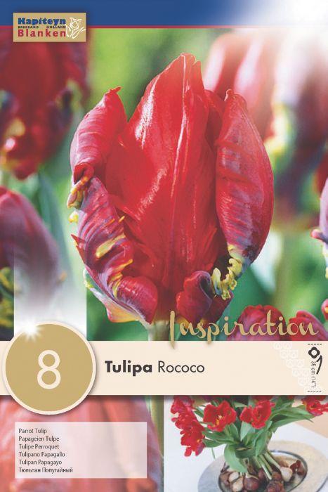 Syyskukkasipuli Tulppaani Parrot Rococo 8 kpl