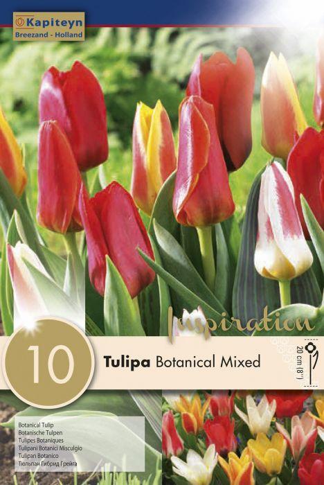 Syyskukkasipuli Tulppaani Botanical Mix 10 kpl