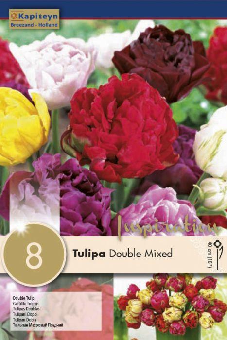Syyskukkasipuli Tulppaani Double Mix 8 kpl