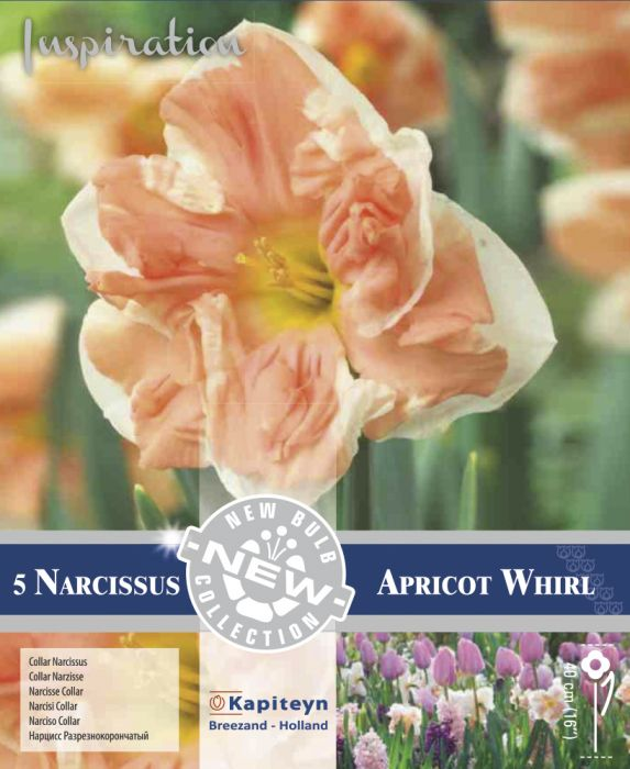Syyskukkasipuli Narsissi Collar Apricot Whirl 5 kpl