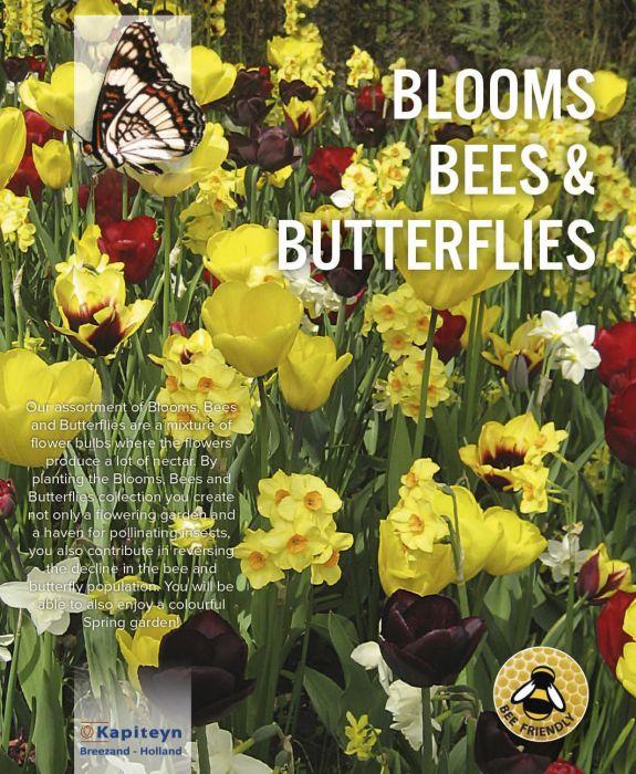 Kukkasipulilajitelma keltainen-tummanpunainen 25 kpl