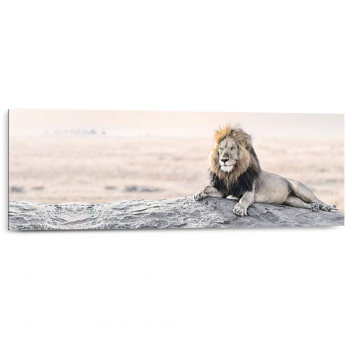 Sisustustaulu Reinders Bright Wildlife Lion 30x90 cm