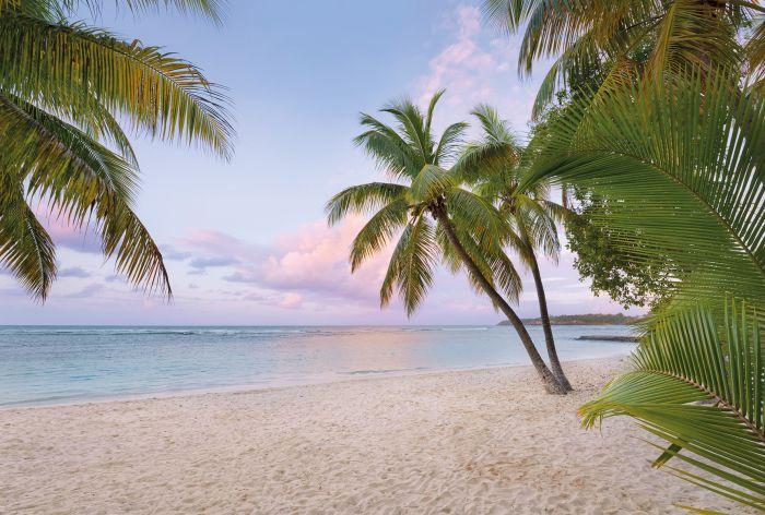 Fototapetti Komar Paradise Morning