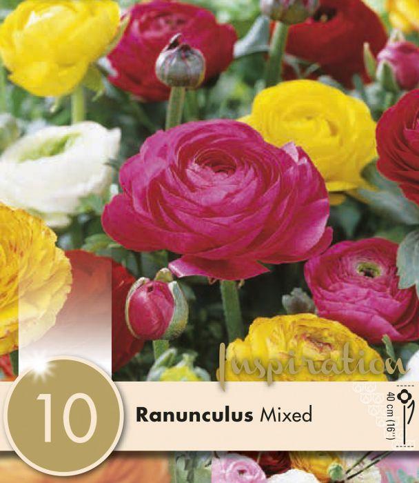 Kevätkukkasipuli Ranunculus Mix 10 kpl
