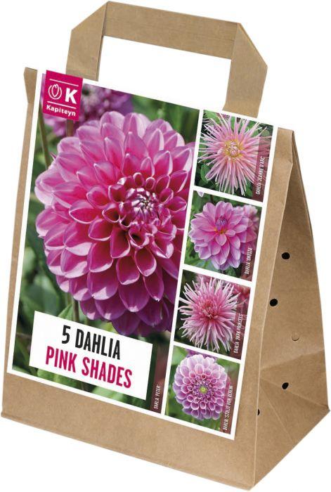 Kevätkukkasipuli Dahlia Shades of Pink 5 kpl